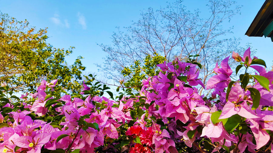 Flower Growth Fragility Freshness Nature Beauty In Nature Low Angle View No People Tree Sky Plant Pink Color Blossom Outdoors Day Close-up Branch Flower Head
