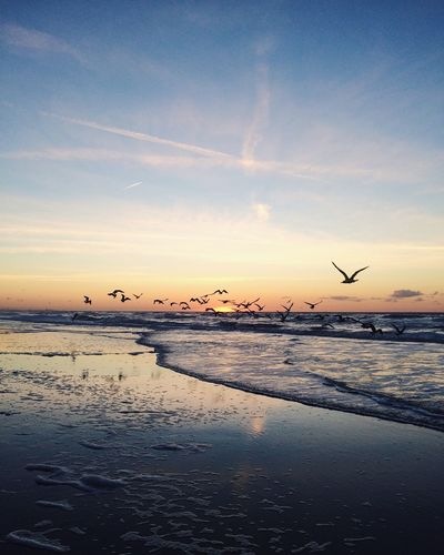 Beach birds Showcase March Shootermag EyeEm Best Shots EyeEm Nature Lover Eye4photography  EyeEm Gallery EyeEm Best Edits EyeEmBestPics EyeEm Photography Beach Sunset Sunset_collection Live For The Story
