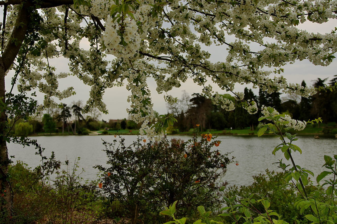 SCENIC VIEW OF LAKE AND TREES BY PLANTS