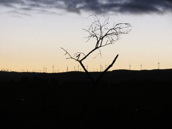 Aotearoa New Zealand LandoftheLongWhiteCloud Dawn Sunrise Tararua Ranges Manawatu Wind Turbines Bare Tree Silhouette Landscape Sky Nature Tree Outdoors Plant Beauty In Nature Branch No People Scenics Day