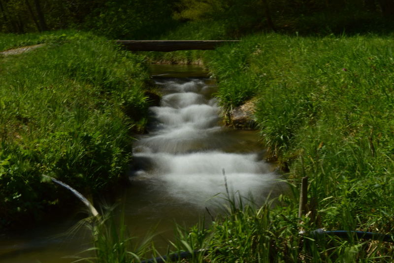 Blumen *~* Nature Photography Bäume🌲🌳 Day Landscape Nature Outdoors Wasser