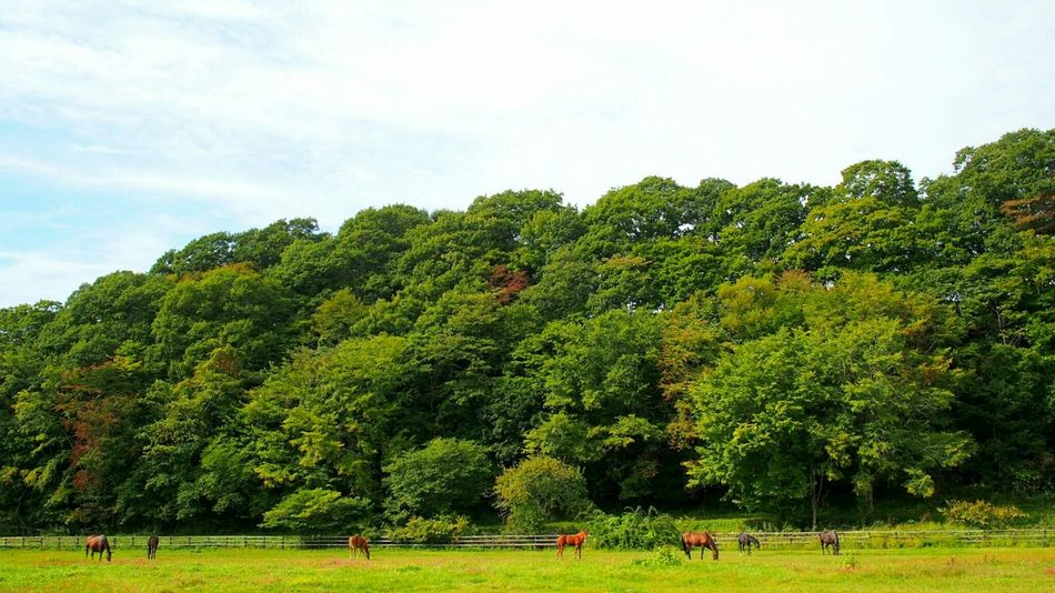 Horse Thoroughbred Forest
