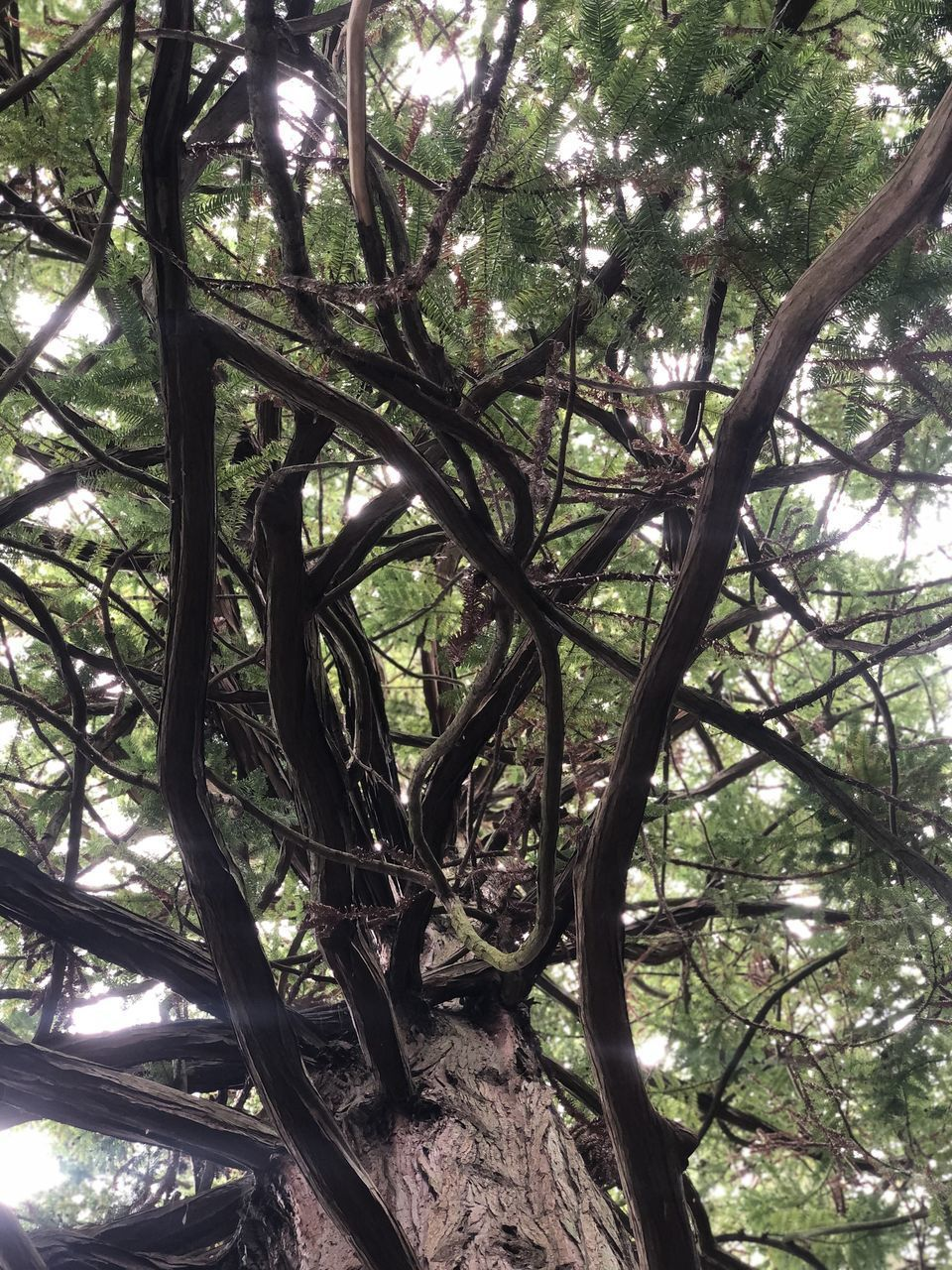 LOW ANGLE VIEW OF TREE TRUNKS