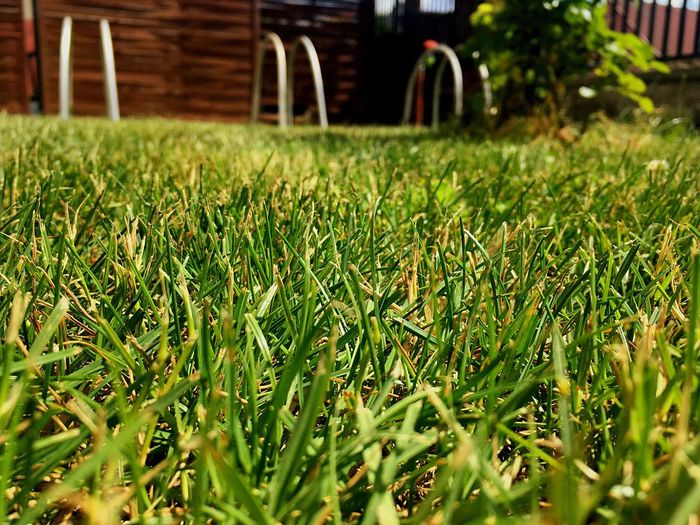 Green Brown Grass Beautiful Garden IPhone SE Hungary Abda Afternoon Get Down Close-up Lots Of Greens