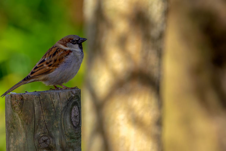 Animal Animal Themes Bird Animal Wildlife Vertebrate Animals In The Wild One Animal Perching Wood - Material Focus On Foreground Day No People Close-up Boundary Post Outdoors Barrier Fence Nature Wooden Post