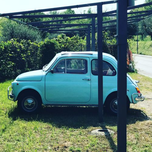 Fiat 500 Italy Vintage Cars Fiat500 Fiat Transportation Plant Mode Of Transportation Day No People Tree Motor Vehicle Sunlight Green Color
