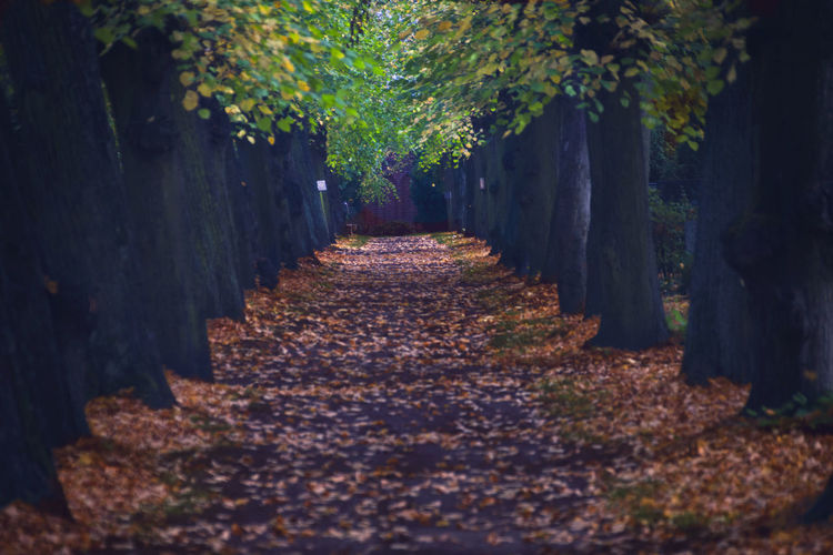 Fall colors 🤩