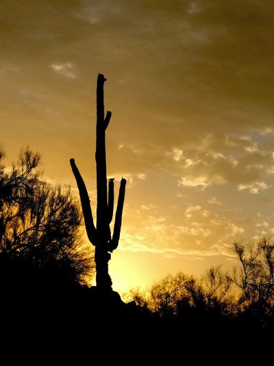Silhouette cactus plant on field against sky during sunset