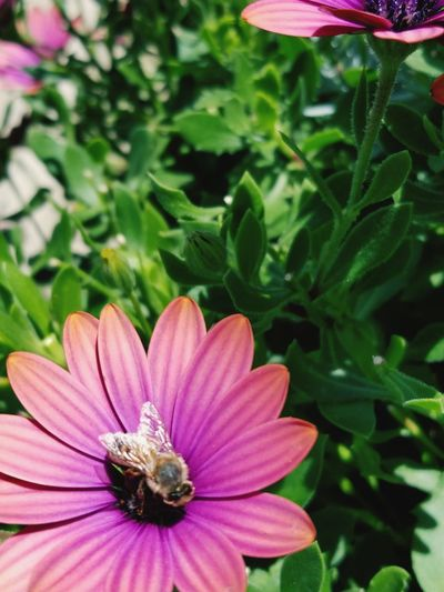 Flower Nature Fragility Petal Growth Flower Head Focus On Foreground Beauty In Nature Plant Freshness Close-up Outdoors Pink Color Blooming Day Insect No People Animal Themes