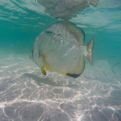 Seychelles Fish La Digue