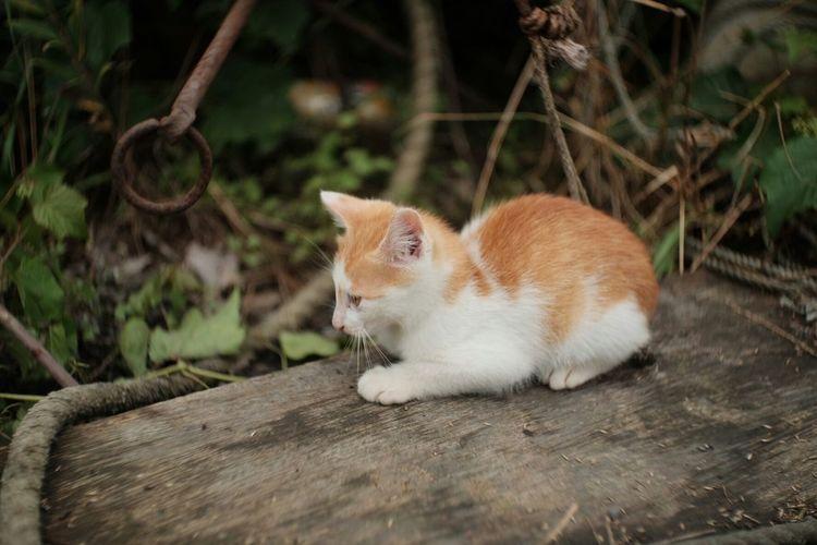 Cute kitten sitting on wood in back yard