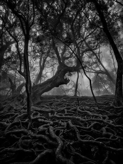 Rooted. Roots Tree Branch Tree Trunk Forest Sky Landscape Tree Area Dense