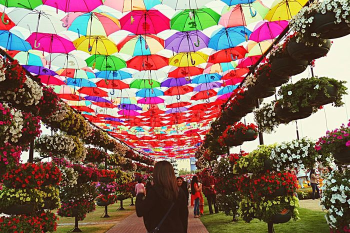 Colors Umbrellas Colorfulflowers MiracleGarden Wintertime