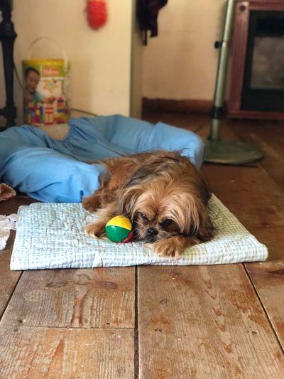 Domestic Animals Pets Domestic Mammal One Animal Canine Dog