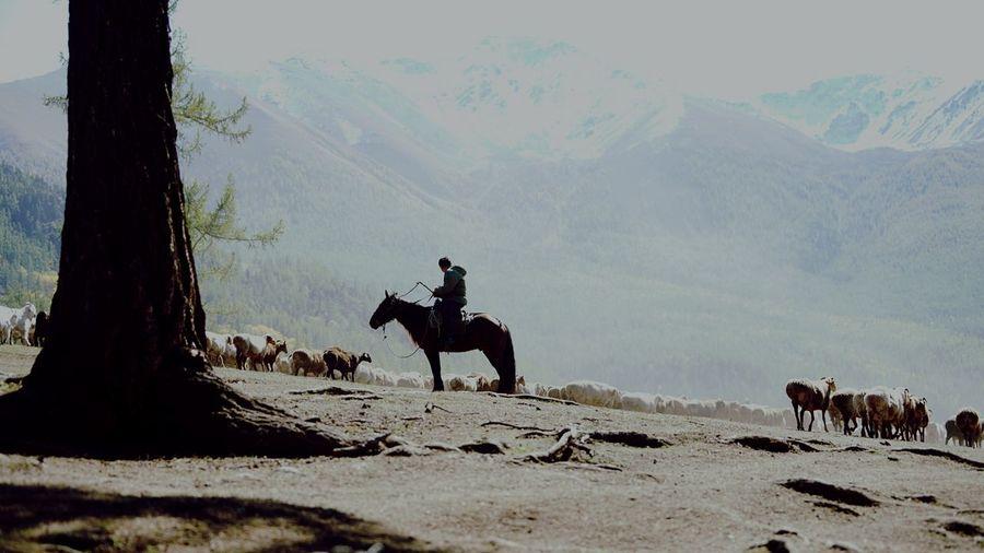 牧羊人 Silhouette