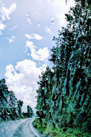 Cloud - Sky Tree Outdoors Sky Water Nature rain Droplets Raindrops Raindropshot RainyDay