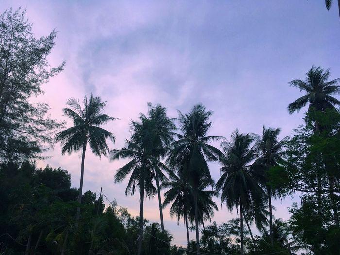 Beach Palm Tree Sky Sunset Thailand First Eyeem Photo