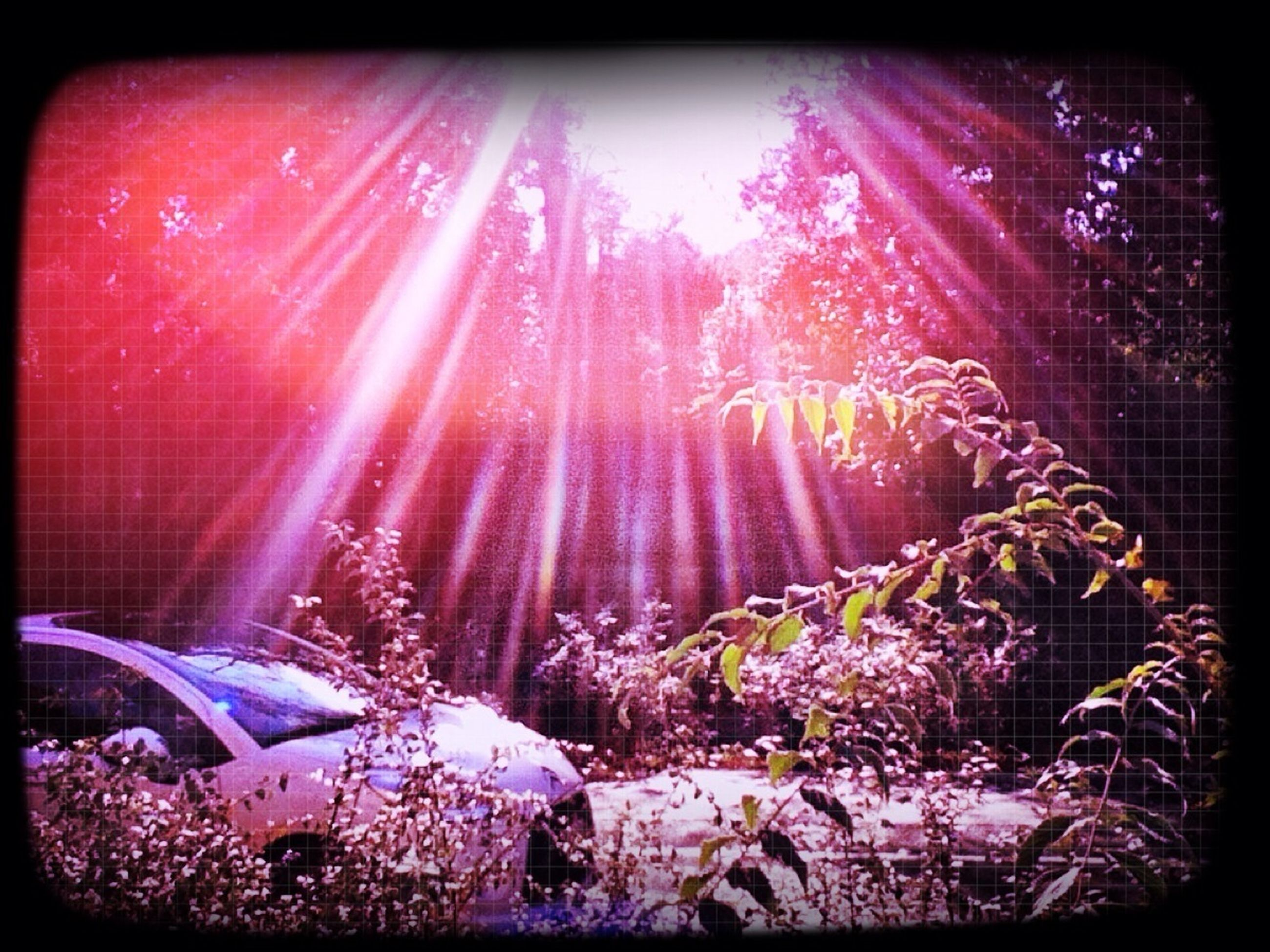 transfer print, auto post production filter, illuminated, lens flare, night, sunbeam, flower, glowing, sunlight, celebration, no people, outdoors, built structure, burning, plant, low angle view, light - natural phenomenon, lighting equipment, nature, building exterior