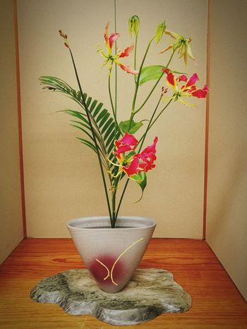 Plant Potted Plant Vase Flower Indoors  Home Interior Table Growth No People Nature Day