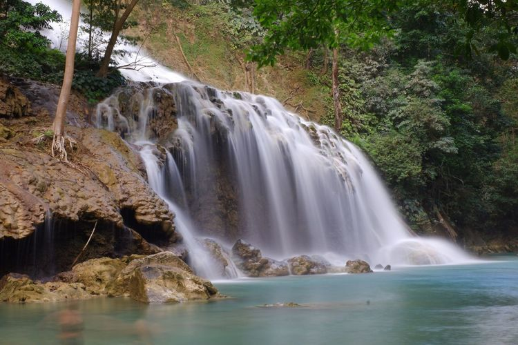Water Tree Beauty In Nature Scenics - Nature Waterfall Plant Motion Flowing Water Forest Nature Outdoors Power In Nature Day Land Long Exposure No People