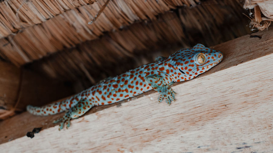High angle view of a lizard on wood