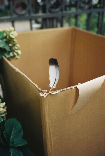 35mm 35mm Film Analogue Photography Film Simple Moment Tranquility Box Box - Container Cardboard Close-up Container Feather  Film Photography Filmisnotdead Paper Plant Simple Simple Beauty Simplicity Tranquil Scene