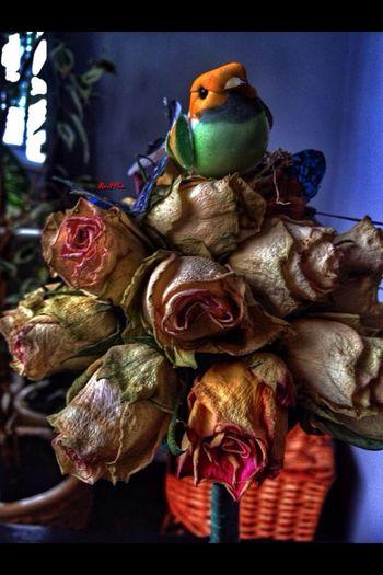 Flowers Birds Colors