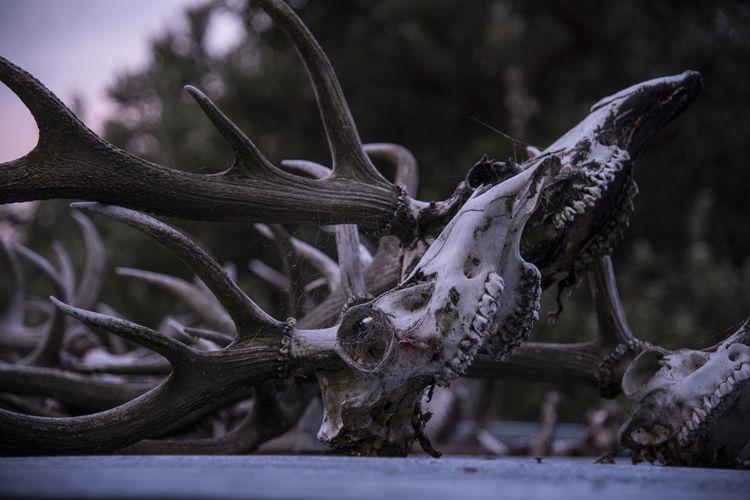 Close-up of skull