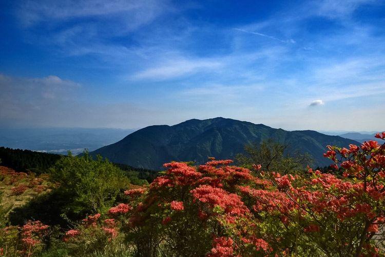葛城山 つつじ 山頂 高ぼっち 5月 山の風景 EyeEm Japan EyeEm Best Shots - Nature EyeEm Nature Lover True Beauty