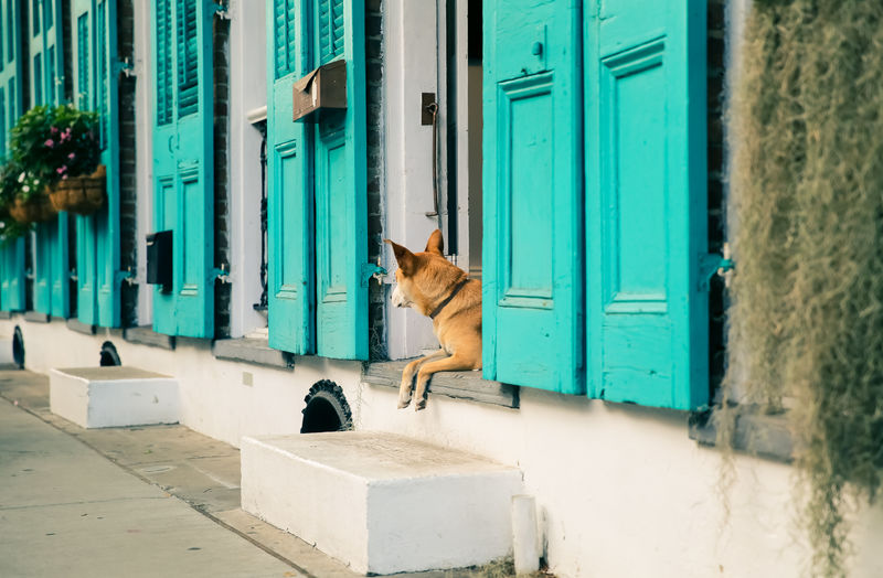 Street Life, NOLA Blue Day Dog Green Color Mammal Multi Colored Nature New Orleans No People NOLA Original Experiences Outdoors Street Photography Turquoise