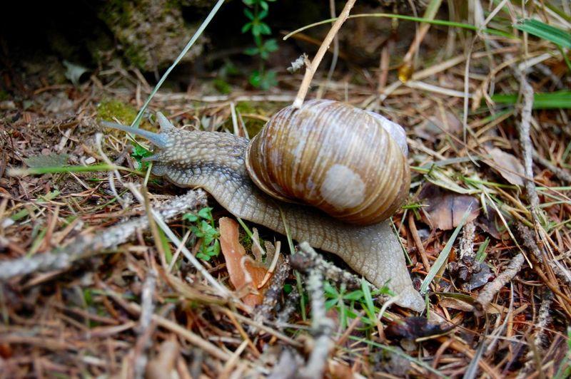 Snail Nikon