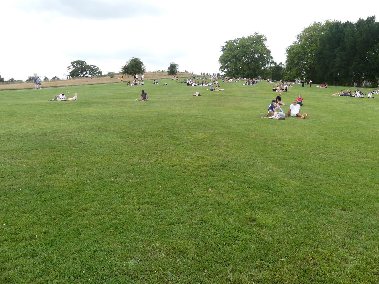 grass, plant, green color, tree, field, land, group of people, real people, people, nature, sport, men, day, leisure activity, sky, park, crowd, landscape, playing, outdoors