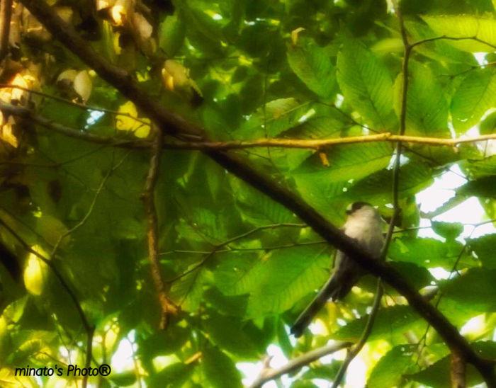 今日は野鳥撮りに行ってきました!でもなかなか見つからないし、いても撮るの難しい^_^;しかもレンズの焦点距離が足りないので、あまりいい写真ではないです😭 エナガ かな? EyeEm Best Shots EyeEm Eyebird Landscape With Birds