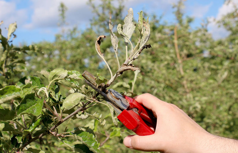 Close-up of person cutting plants against sky