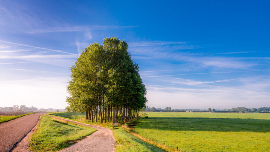 Small forest at a dike in the Netherlands, near a very small town called Marle. Farmland Rural The Netherlands Wood Beauty In Nature Day Field Forest Grass Green Color Growth Holland Landscape Nature No People Outdoors Road Rural Scene Scenics Sky Summer The Way Forward Tranquil Scene Tranquility Tree