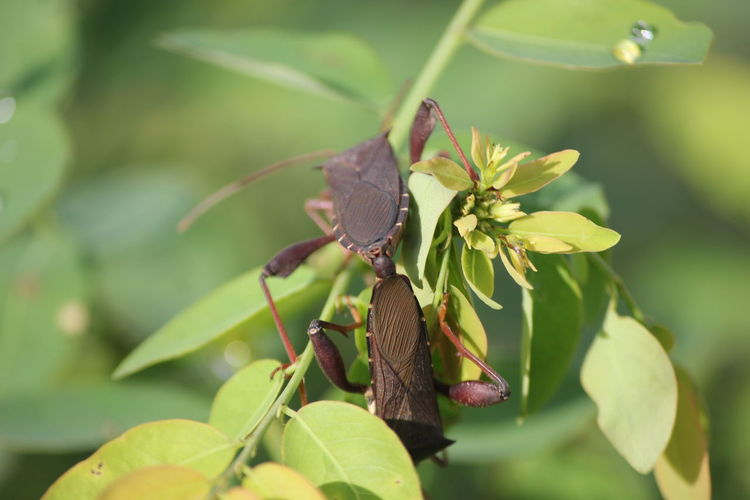 Leaf Perching Insect Full Length Close-up Animal Themes Plant Dragonfly Animals Mating Animal Wing Animal Antenna Grasshopper Arthropod Fly Damselfly Twig Mating Ant Mosquito Praying Mantis Spider Invertebrate Jumping Spider Chachoengsao Spider Web Pollination Pest Butterfly - Insect Animal Leg Web
