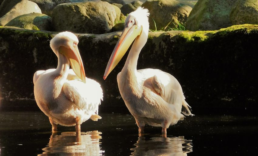 Ducks on rock at lakeshore