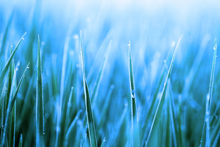 background of grass with bokeh Growth Plant Nature Close-up Selective Focus Beauty In Nature No People Agriculture Grass Field Day Green Color Crop  Land Freshness Blade Of Grass Tranquility Rural Scene Sunlight Outdoors Dew