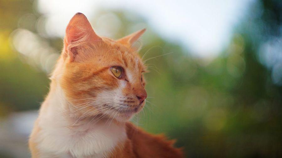 Close-up portrait of ginger