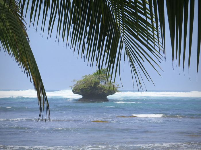 Beach Beauty In Nature Horizon Over Water Island Palm Tree Sea Shore Tranquility Water