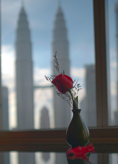Close-up of red rose in vase