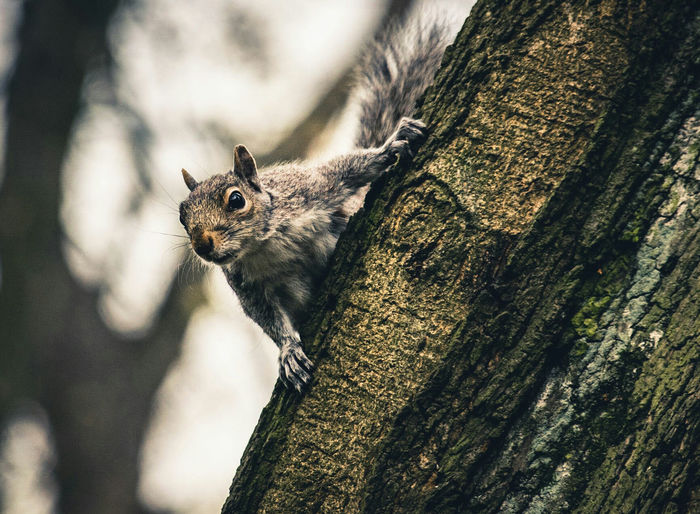 EyeEm Selects One Animal Animal Wildlife Animals In The Wild Day Tree Animal Themes No People Tree TrunkNature Close-up Outdoors Squirrel Hull City Of Culture 2017 Hull Yorkshire