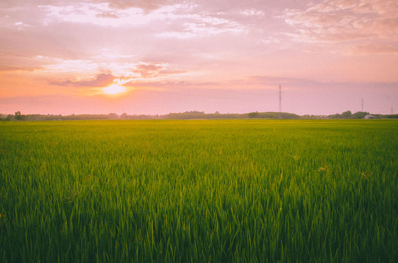 Sunset✨trees✨ Agriculture Field Beauty In Nature Green Color Landscape Sky Nature Farm Vibrant Color