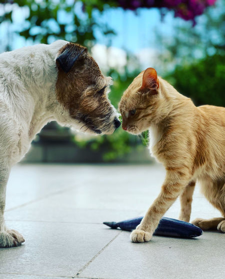Side view of two cats