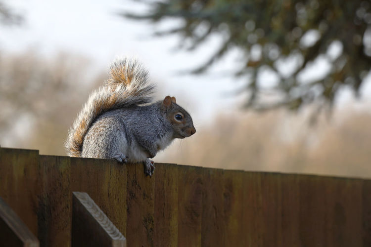 Low angle view of squirrel on wood