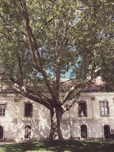 Tree Built