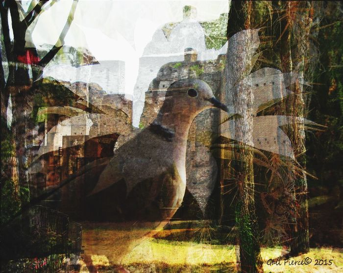 Dreaming of Italy. Dove. Digital Expression, Birds, Distressed Train, Digital Expression