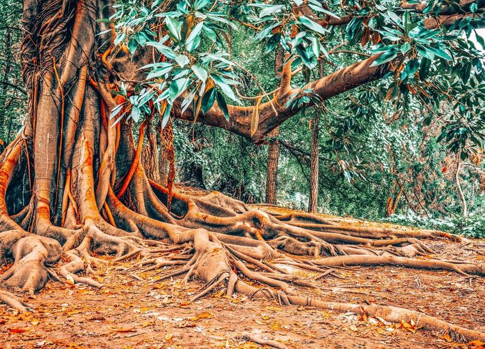 Magnolia tree roots. Magnolia Tree Tree Tree Trunk Trees And Nature Trees Roots Root Vegetable Roots Of Tree Roots And Branches Nature Forest Beauty In Nature Park Travel Tree_collection  Nature_perfection Foliage Leaf Trunk Backgrounds Tree Full Frame Pattern Fishing Net Textured  Close-up Sky