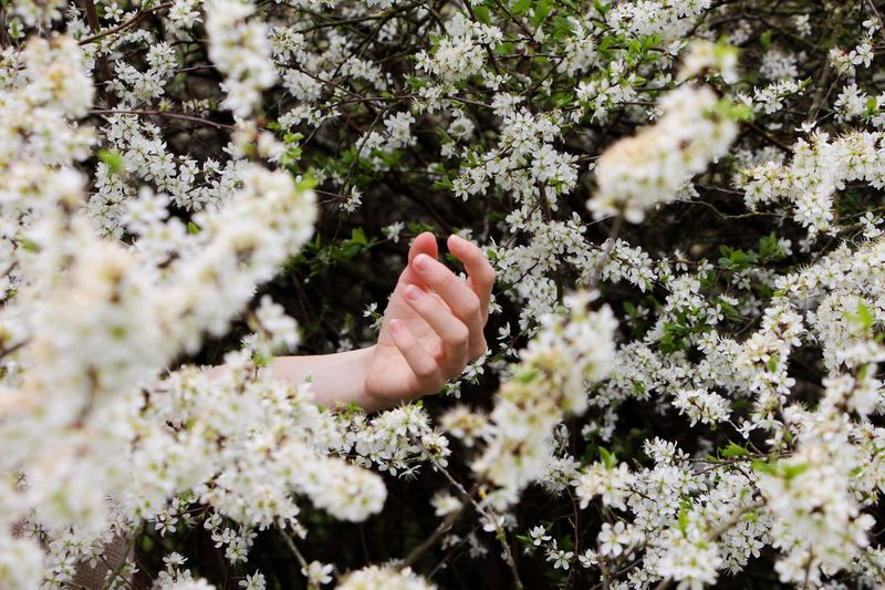 Cropped Hand Amidst White Flowering Plants In Park