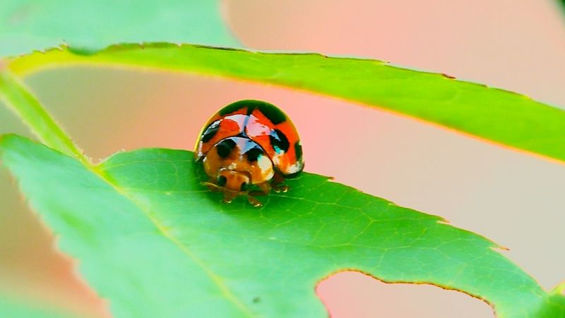 bug Micro #photography #insects #leaf Macroclique Macro_collection Macro Macro Photography EyeEm Selects Leaf Insect Close-up Ladybug Fly Bug Tiny Blooming Animal Antenna